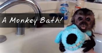 baby-monkey-taking-a-bath-video